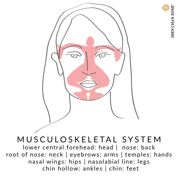Dien Chan Zone, Italian facial reflexology, musculoskeletal system, face mpa, for both men and women of all ages.